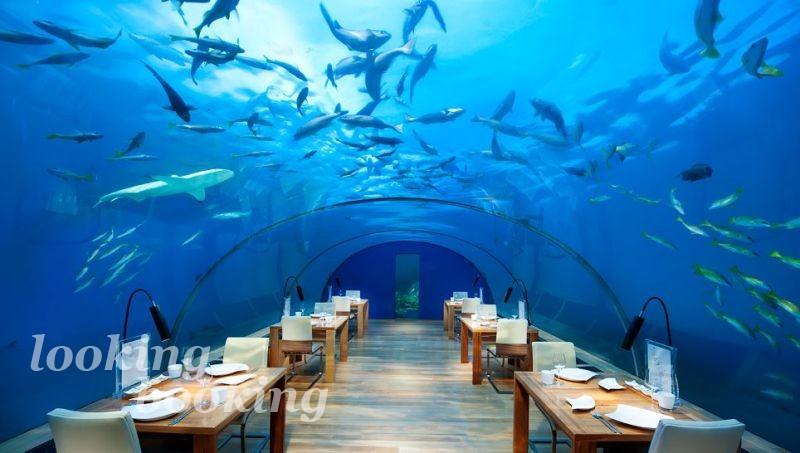 Акулы и рыбы